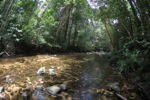 Clearwater jungle stream in Borneo