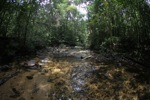 Clearwater rain forest stream in Borneo