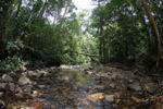Clearwater jungle creek in Borneo