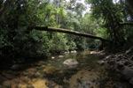 Clear-water rainforest stream in Borneo