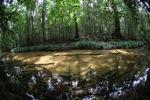 Clearwater jungle creek in Indonesian Borneo (Kalimantan)