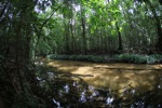 Clearwater rainforest stream in Indonesian Borneo (Kalimantan)