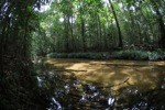 Clear-water rainforest stream in Indonesian Borneo (Kalimantan)