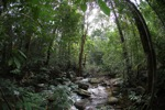 Kalimantan jungle [kalbar_1563]