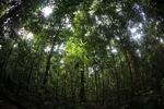 Borneo rain forest