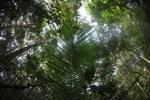 Borneo rainforest [kalbar_1863]