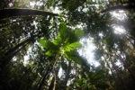 Seedling growing on the rainforest floor
