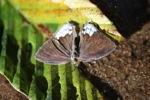 Butterfly [kalbar_2155]