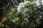Rainforest in Indonesian Borneo