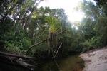 Epiphyte in Borneo [kalbar_1649]