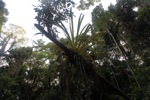 Epiphyte in Borneo
