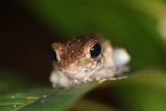 Frog [kalbar_1672]