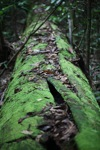 Moss-covered fallen rainforest log