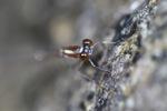 Gold dragonfly [kalbar_1765]
