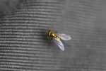 Gold fly [kalbar_1774]