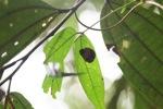 Beetle [kalbar_1875]