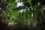 Borneo rainforest [kalbar_1865]