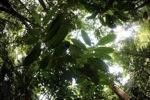 Borneo rainforest [kalbar_1869]