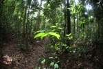 Borneo rainforest [kalbar_1870]