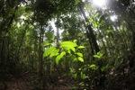 Borneo rainforest [kalbar_1871]