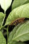 Crazy giant centipede [kalbar_1942]