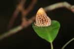 Orange and red butterfly with blue and black spots [kalbar_2114]
