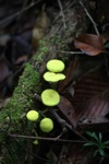 Glowing green mushrooms