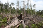 Deforested landscape in Borneo [kalbar_2202]