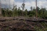Deforested landscape in Borneo [kalbar_2217]