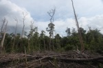 Deforested peatlands in Borneo [kalbar_2218]
