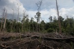 Deforested rainforest in Borneo [kalbar_2235]