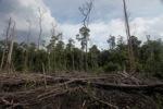 Deforested rainforest in Borneo [kalbar_2235]