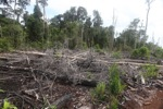 Logging path for illegal loggers in Borneo [kalbar_2208]