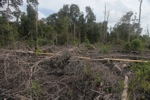Logging trail for illegal loggers in Borneo [kalbar_2214]