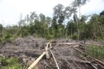 Logging path for illegal loggers in Borneo