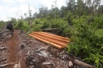 Timber illegally cut from a rainforest in Borneo [kalbar_2231]