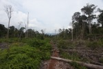 Deforested landscape in Borneo [kalbar_2233]
