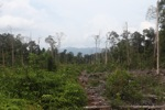 Deforested peatlands in Borneo [kalbar_2234]