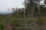 Cut, drained, and burned peat swamp forest [kalbar_2237]