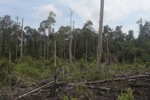 Deforested rainforest in Borneo [kalbar_2226]