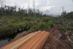 Timber illegally cut from a rainforest in Borneo