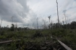 Deforested landscape in Borneo [kalbar_2238]