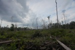 Deforested peatlands in Borneo [kalbar_2244]