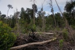 Cut, drained, and burned peat swamp forest [kalbar_2242]