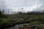 Deforested landscape in Borneo [kalbar_2243]