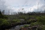 Deforested peatlands in Borneo [kalbar_2254]