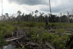 Deforested rainforest in Borneo [kalbar_2245]