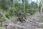 Cut and drained peat swamp forest [kalbar_2251]