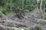 Cut, drained, and burned peat swamp forest [kalbar_2252]