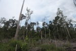 Deforested peatlands in Borneo [kalbar_2259]